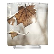 Covered With Ice Maple Leafe On A Sunny Day Shower Curtain