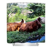 Cow 6 Shower Curtain