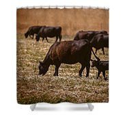 Cow And Calf Grazing Shower Curtain