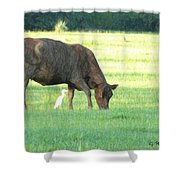 Cow And Friend Abstract Shower Curtain