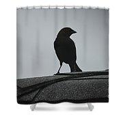 Cow Bird Silhouette  Shower Curtain