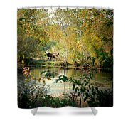 Cow By The Pond Shower Curtain