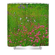 Cow Clover And Ox-eye Daisies On Campobello I Shower Curtain