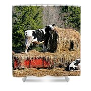 Cow Country Buffet Shower Curtain