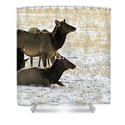 Cow Elk   #0460 Shower Curtain