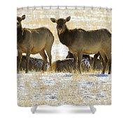 Cow Elk   #0479 Shower Curtain