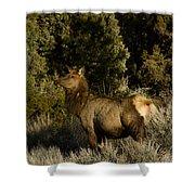 Cow Elk   #7582 Shower Curtain