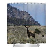 Cow Elk   #9488 Shower Curtain