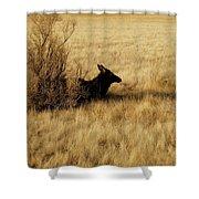 Cow Elk Shower Curtain by Johanna Elik