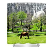 Cow Grazing In Pasture In Spring Shower Curtain