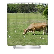 Cow Grazing With Egret Shower Curtain
