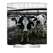 Cow Hugs Shower Curtain
