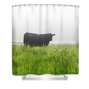 Cow In Fog Shower Curtain