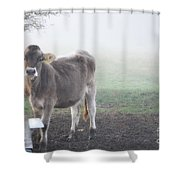 Cow In The Fog Shower Curtain