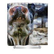 Cow Kiss Me Photo Art Shower Curtain