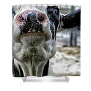 Cow Kiss Me Shower Curtain