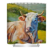 Cow Lying Down  Shower Curtain