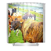 Cows Are Also Having Their Meetings  Shower Curtain