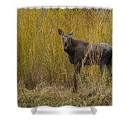 Cow Moose   #1638 Shower Curtain