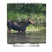 Cow Moose Breakfast Shower Curtain