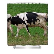 Cow Path Shower Curtain