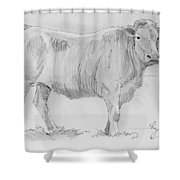 Cow Pencil Drawing Shower Curtain