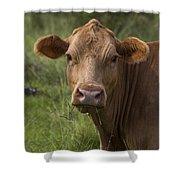 Cow Portrait I Shower Curtain