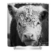Cow Square Shower Curtain