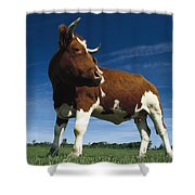 Cow Standing In Field Germany Shower Curtain