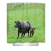 Cow With Calf On Thorpe Hillside Shower Curtain