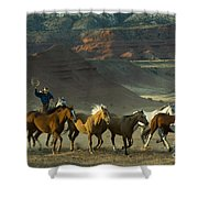 Cowboy Driving Horses Shower Curtain
