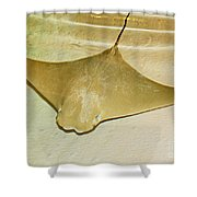 Cownose Ray Shower Curtain