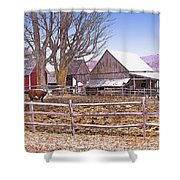 Cows At Jenne Farm Shower Curtain