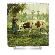 Cows At Pasture  Shower Curtain