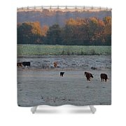 Cows At Sunrise Shower Curtain