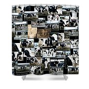 Cows Collage Shower Curtain