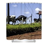 Cows - Costa Rica Shower Curtain