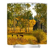 Cows Grazing 3 Shower Curtain