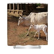 Cows In Hampi Shower Curtain
