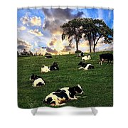 Cows In Pasture Shower Curtain
