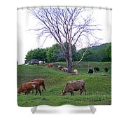 Cows In Rolling Hills Shower Curtain