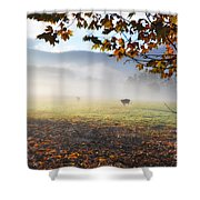 Cows In The Fog Shower Curtain