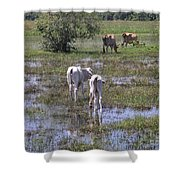 Cows In The Pantanal Shower Curtain