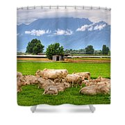 Cows On The Green Field Shower Curtain