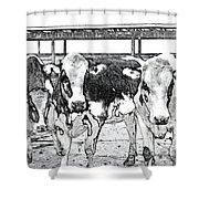 Cows Pencil Sketch Shower Curtain