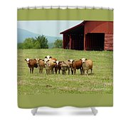 Cows8918 Shower Curtain