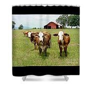 Cows8931 Shower Curtain
