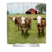 Cows8931 Shower Curtain