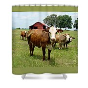 Cows8945 Shower Curtain