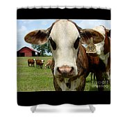 Cows8957 Shower Curtain